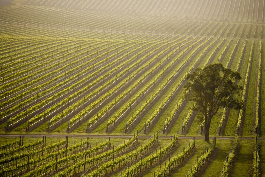 De Bortoli Vines at Dixons Creek in Victoria's Yarra Valley